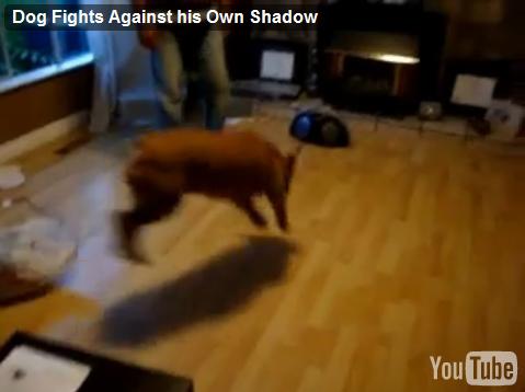 自分の影を攻撃する犬