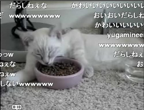 だらしない食事をする猫