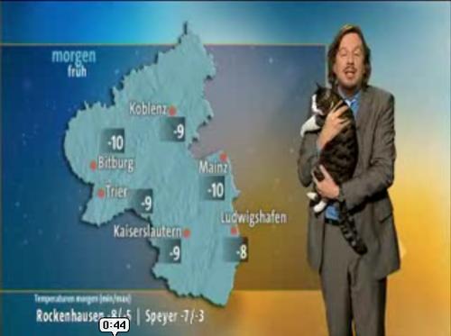 天気予報中に猫が乱入