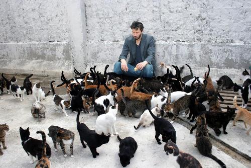 ネコが集まる