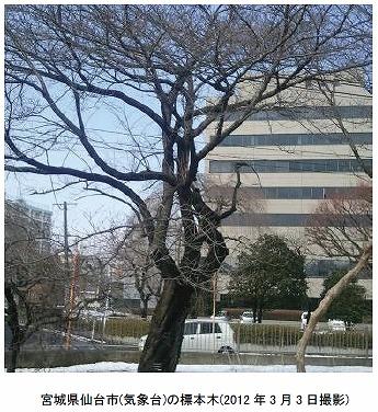 仙台の標本木