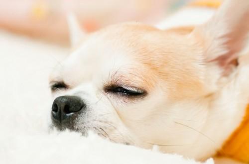 人間と同じ!? 調査結果からわかった「愛犬ダイエットの失敗要因と成功の秘訣」とは?
