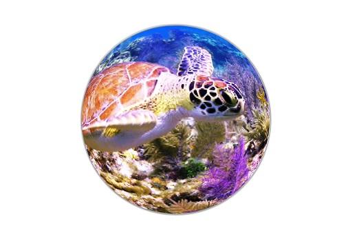 icon_3U_turtle