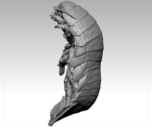 ダイオウグソクムシ1号たん 3Dモデル