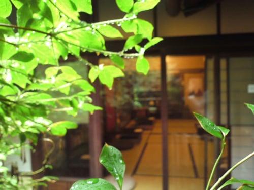 京都・ハイファイカフェ 雨の坪庭から店内をのぞむ