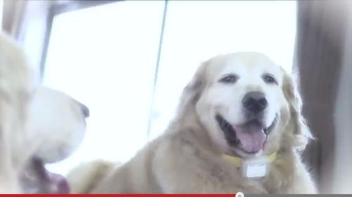 飼い犬の3分の1は肥満!? 痩せた犬にあこがれる肥満犬の気持ちを犬目線で描いた動画『あなたのワンちゃん、だいじょうぶ?』