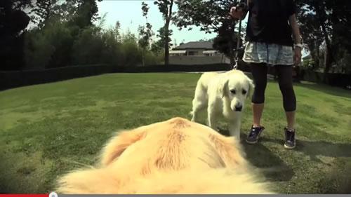 カッコいい犬と出会う