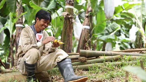 フィリピンのバナナ農園