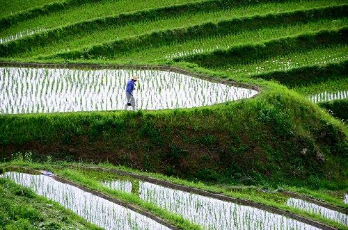【農業】画像