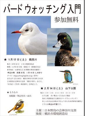 夕方になると無数の鳥たちが襲来する元・マイカル本牧周辺、鳥フン被害状況は?