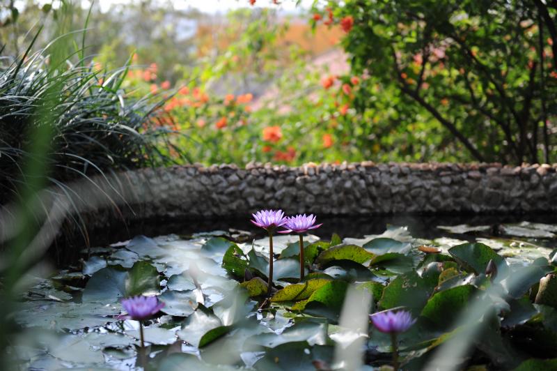 瞑想中は水に浮かぶ花の如し