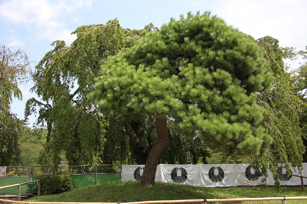 弘前城本丸松