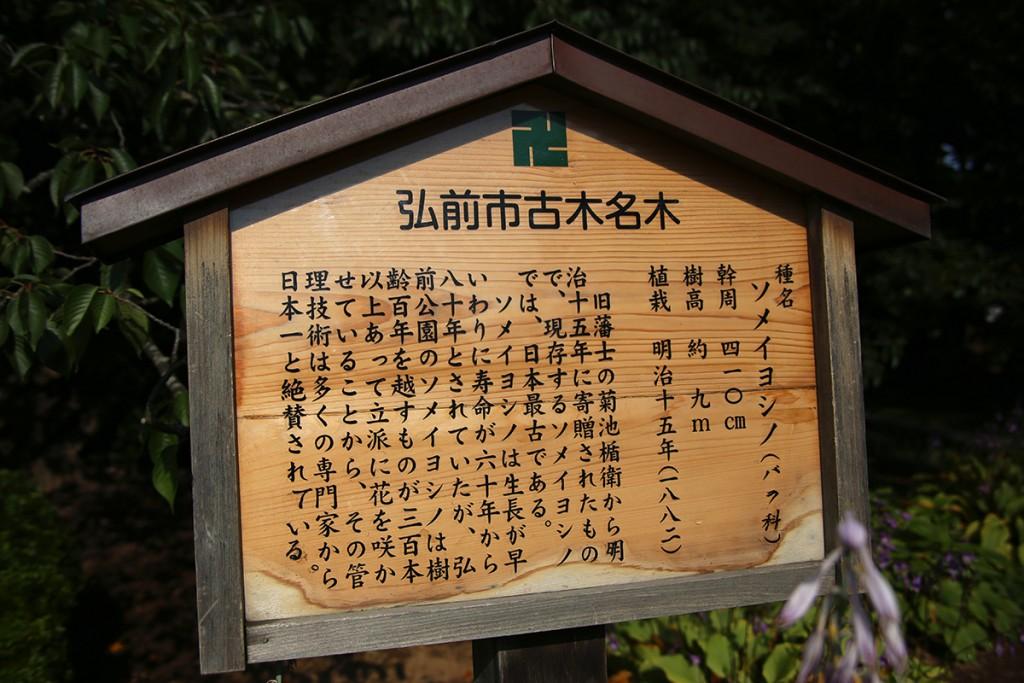 弘前公園サクラ02