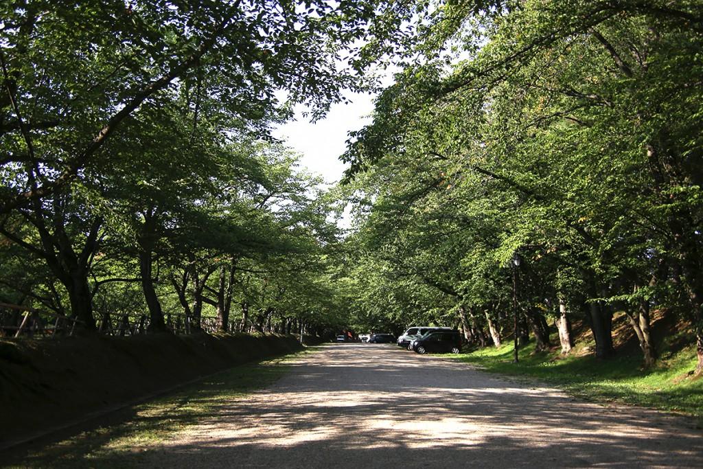 弘前公園サクラ並木