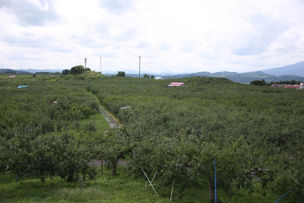 りんご公園02