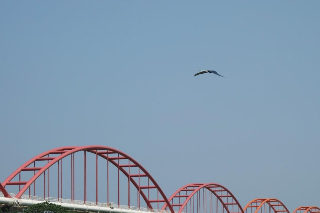 flyinghige12