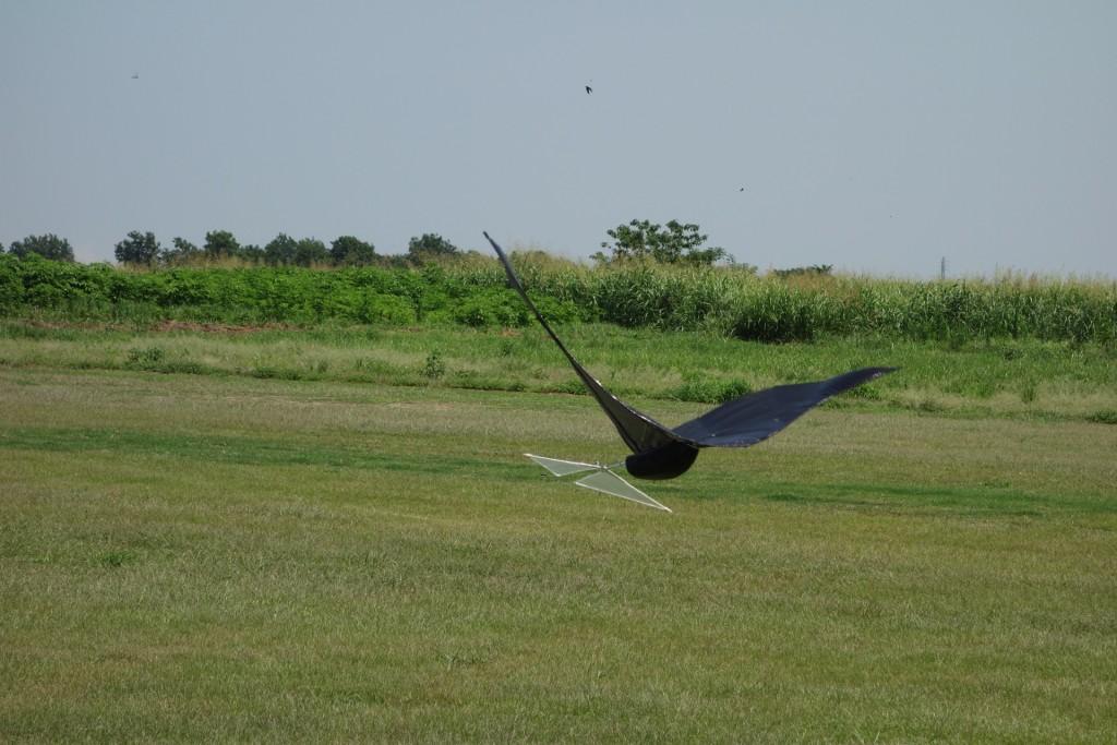 flyinghige13