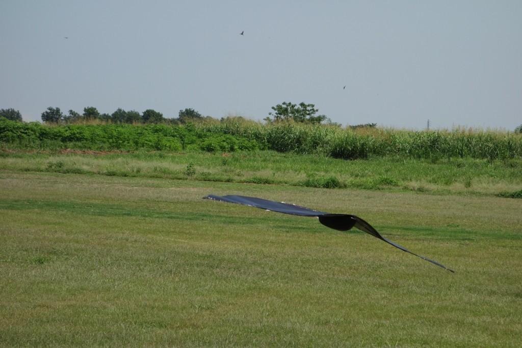 flyinghige14