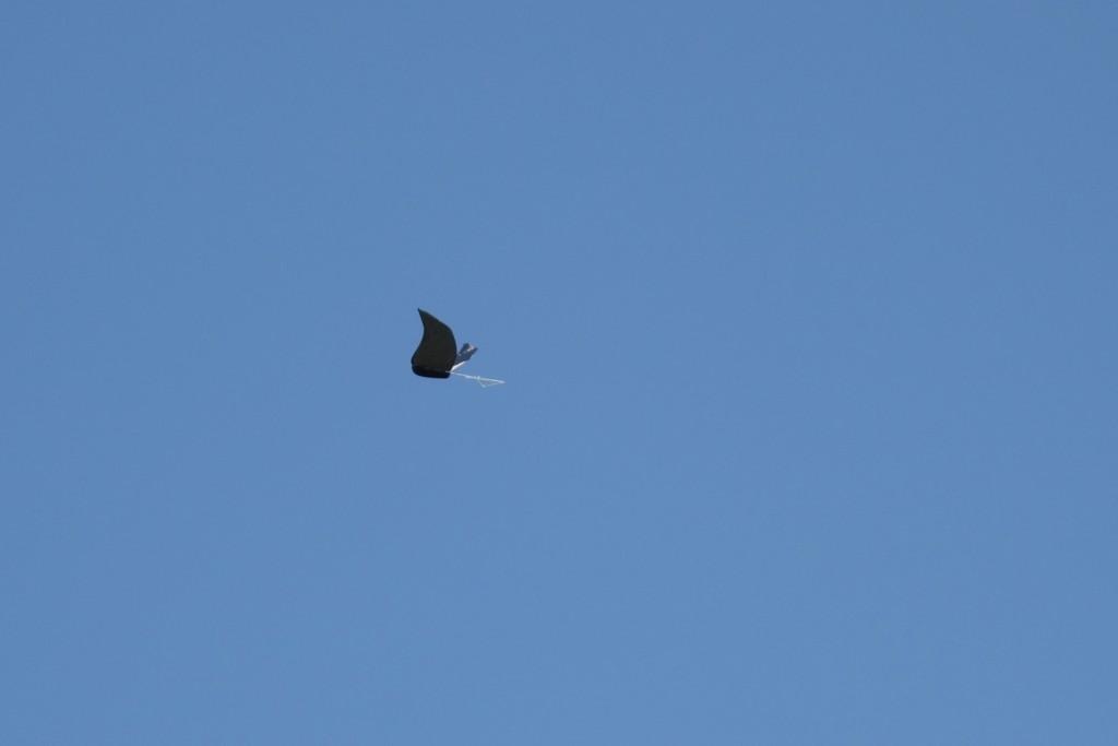 flyinghige3