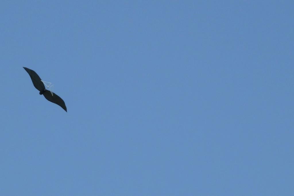 flyinghige4