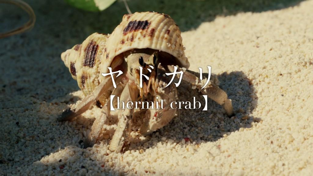 Suumo-HermitCrab_150928_004