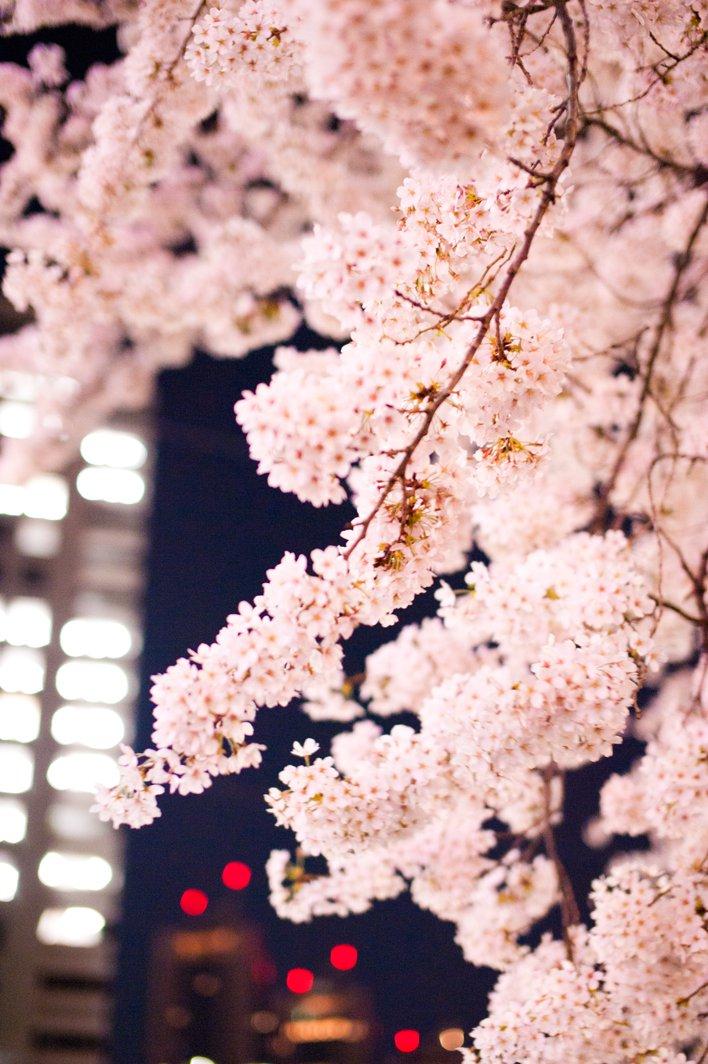 桜_002