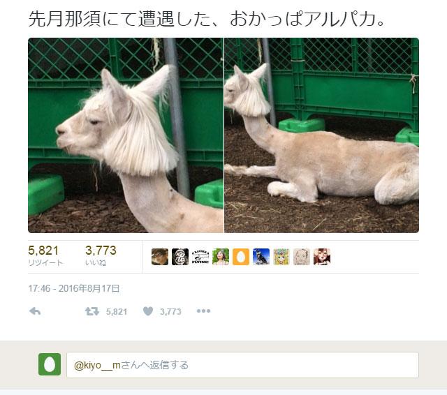 okappa_alpaca