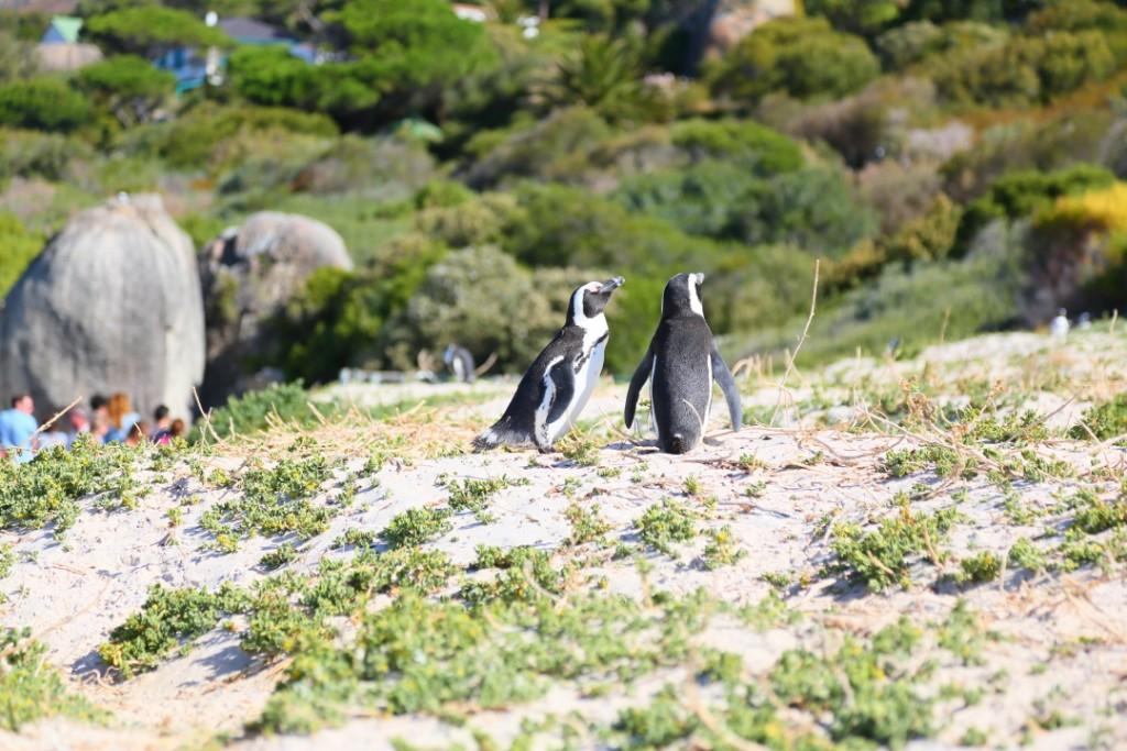 penguin00000004