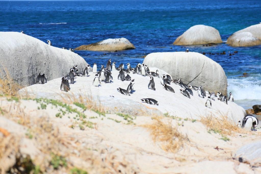 penguin00000005