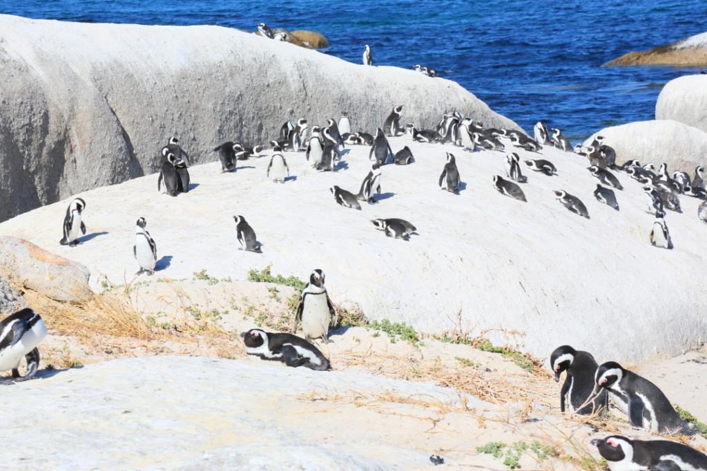 penguin00000007