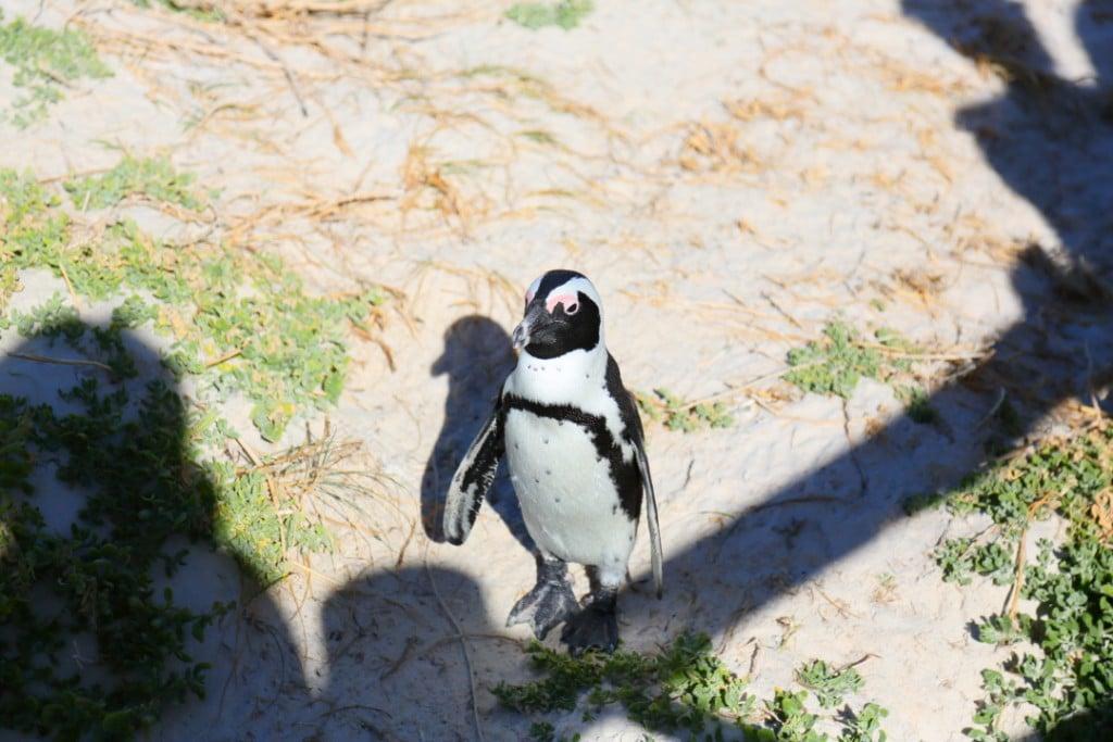 penguin00000009