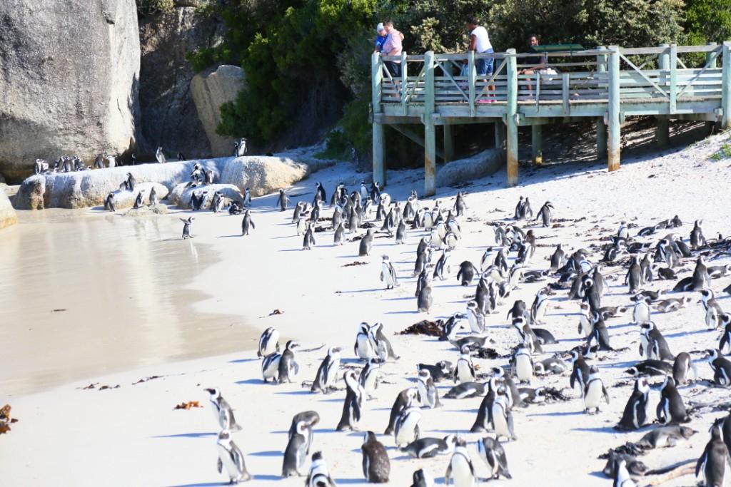 penguin00000013