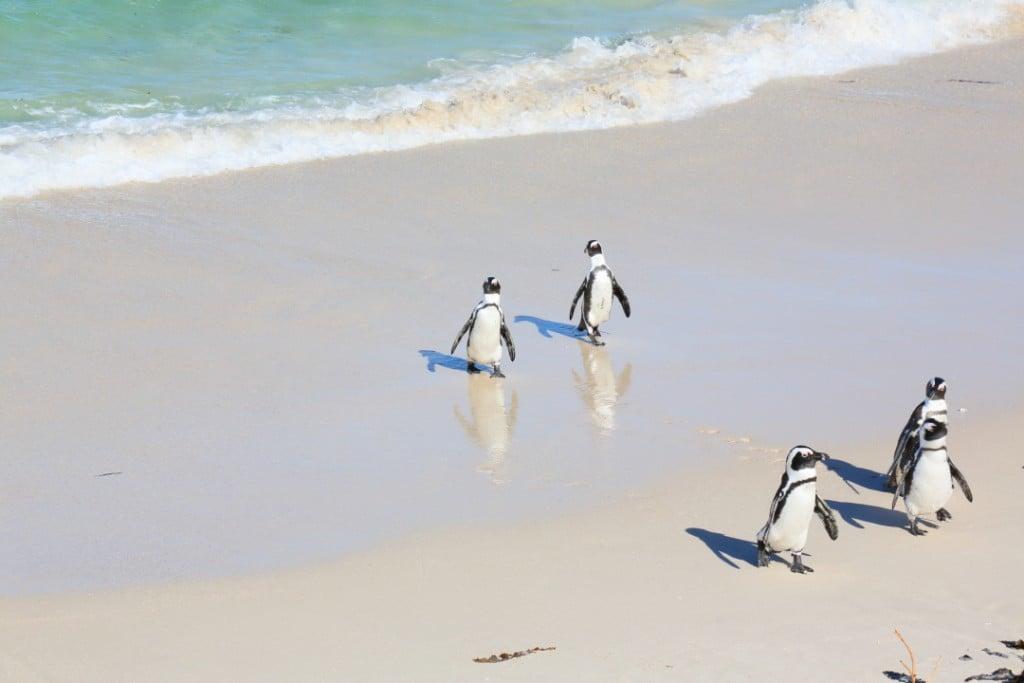 penguin00000015