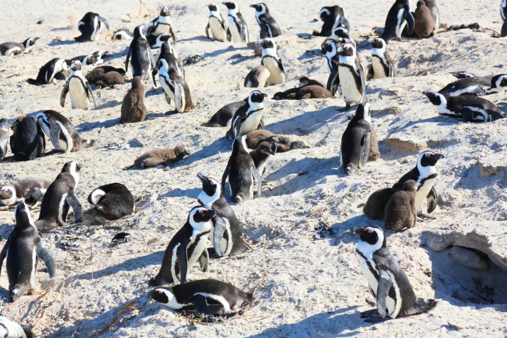 penguin00000022
