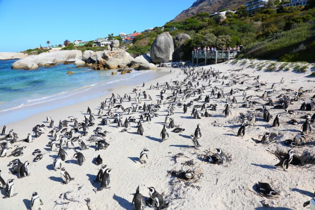 penguin00000026