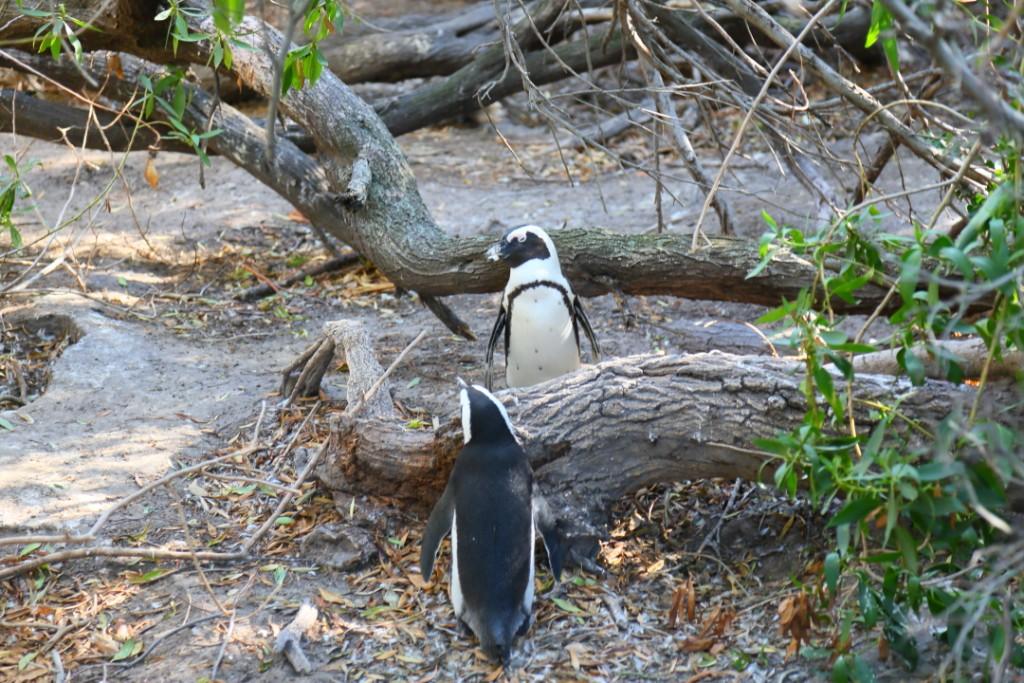 penguin00000030