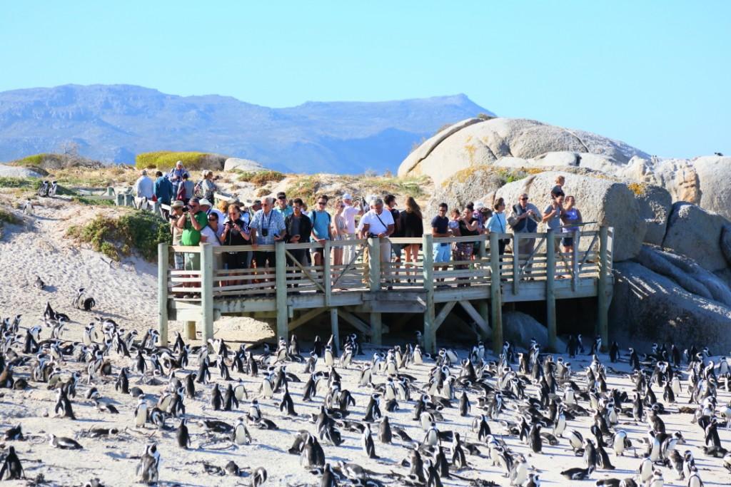 penguin00000032