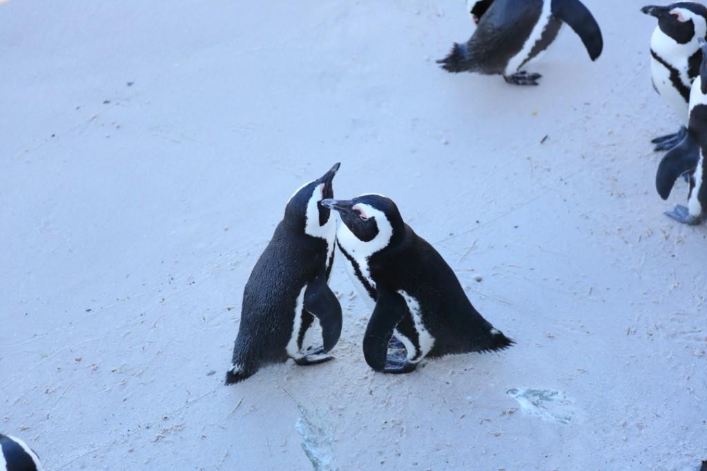 penguin00000034