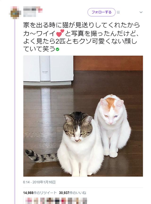 cat_miokuri_01