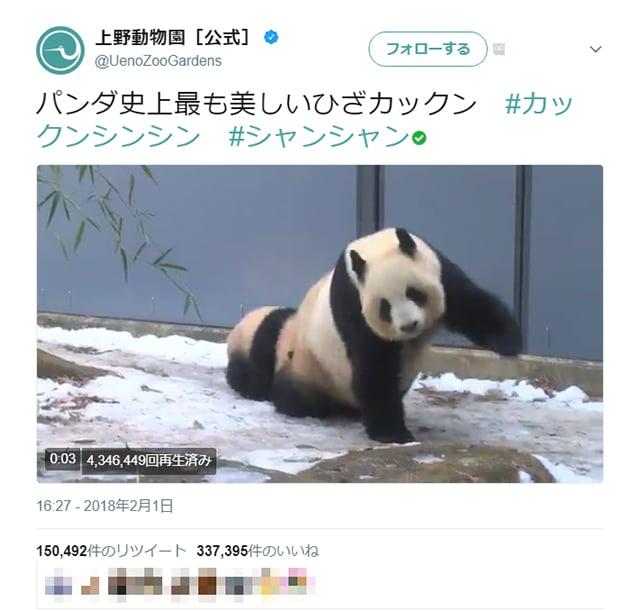 uenozoo_panda_01