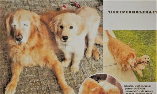 盲目の犬を世話する小犬マベリック