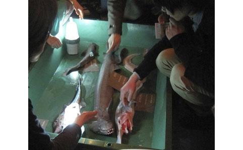 深海ラボ 深海の生物を間近に観察しよう