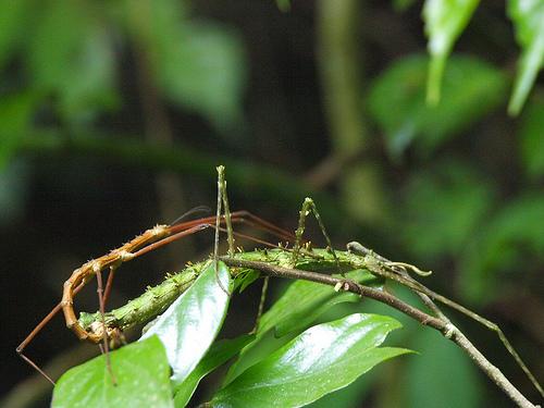 巨大ナナフシからチョウの幻想的な乱舞まで! 雨季のベトナムの森に泊まる