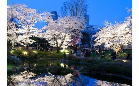 六本木ヒルズ『桜のライトアップ 2013』