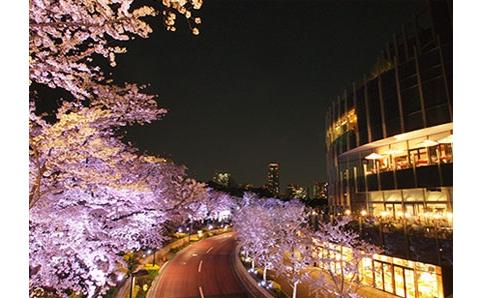 東京ミッドタウン『桜ライトアップ』