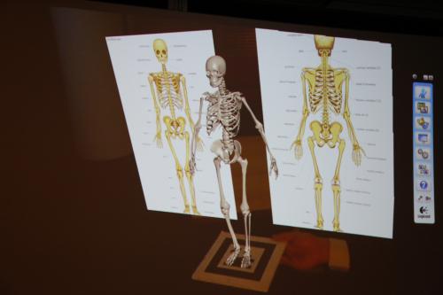 高解像度AR 人体の骨