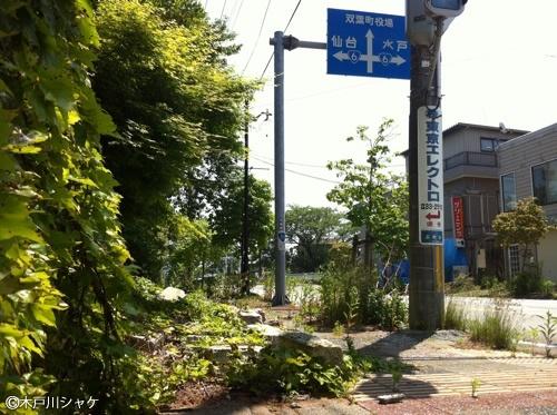 歩道や車道も雑草でボーボーだ/双葉町