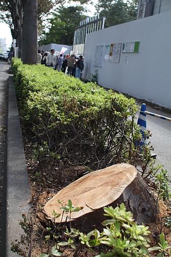 建設地横の木は強風で倒れてしまい、根元から切られていた