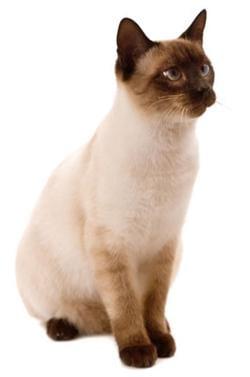 20111114luckycat.jpg