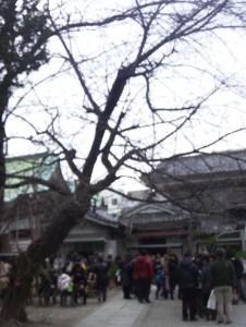 今戸神社の行列